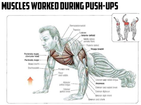 do push ups help bench press best healthy diet plan for weight loss push ups muscles