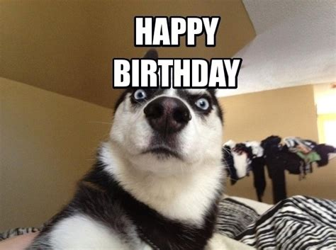 Puppy Birthday Meme - 100 ultimate funny happy birthday meme s my happy