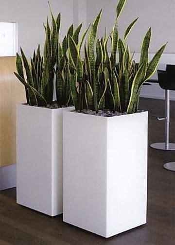 moderne zimmerpflanzen zimmerpflanzen modern beste inspiration f 252 r ihr interior