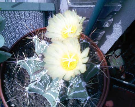 fiore astro 060511 astro fiore forum di giardinaggio it