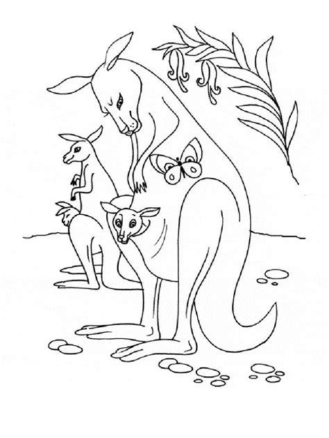 animal coloring pages kangaroo kangaroo animals coloring pages kangaroo best free