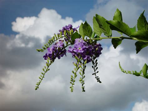 What Is My Gardening Zone - plant identification closed identify this purple flower bush in florida 1 by loveforests
