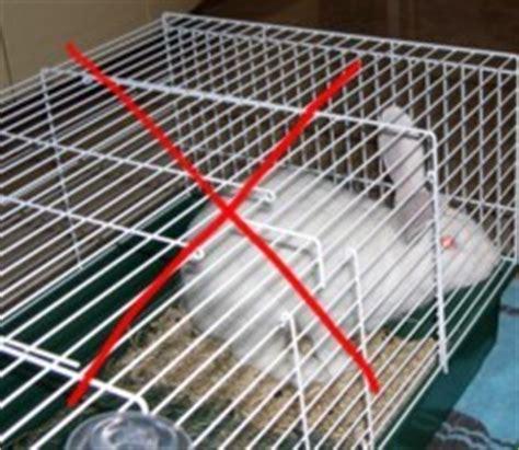 gabbia coniglio fai da te no ai conigli in gabbia su verona animalista