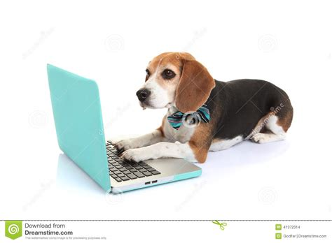 do dogs a concept of time using computer www imgkid the image kid has it