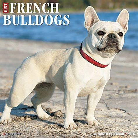 french bulldog c section just french bulldogs 2016 calendar dog luxury store