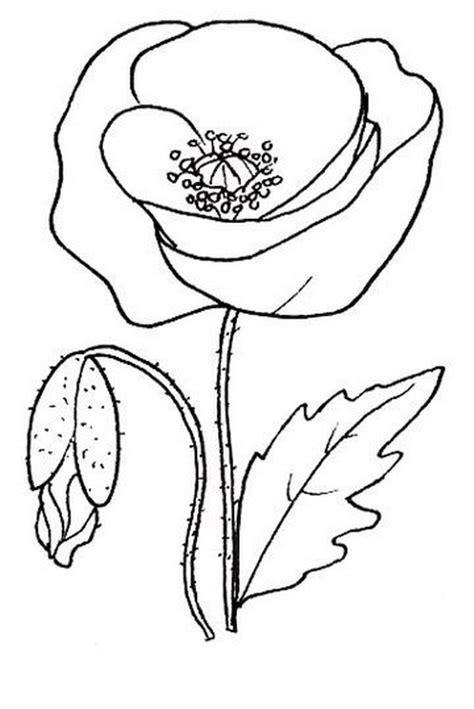 disegni di piante e fiori disegni piante stilizzate idee per il design della casa