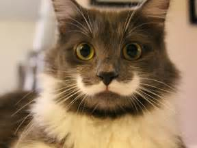 the hamilton the cat on instagram