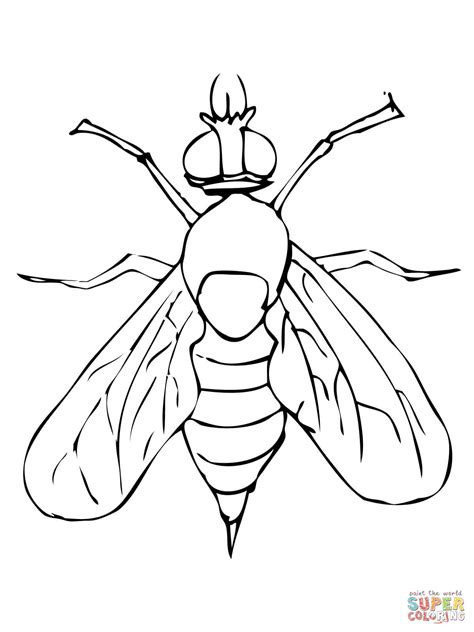 Drosophila Fruit Fly Coloring Online Super Coloring Fly Coloring Page