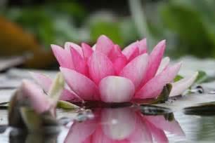 Lotus Flower Temple Le Royaume De Ganesha Un Jardin Des Mondes Pairi Daiza