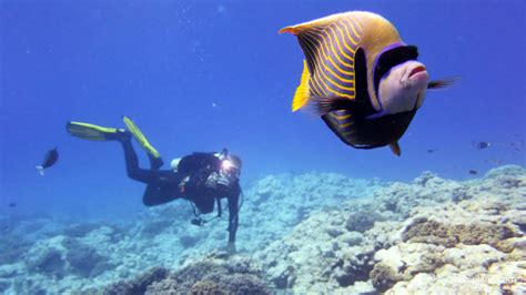 cook islands diving and snorkelling