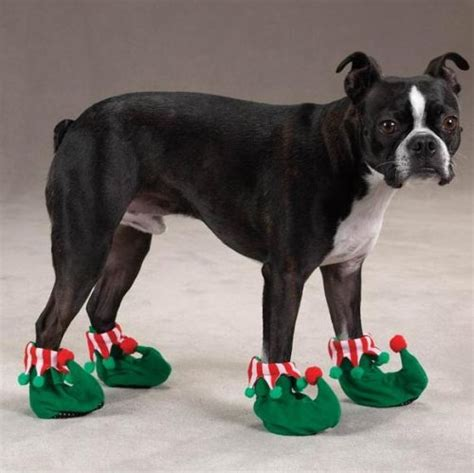 slippers for dogs great information regarding shoes obedience