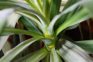 palme wohnzimmer wohnzimmer pflanzen palme ihr traumhaus ideen