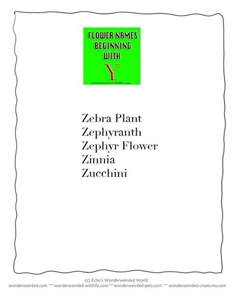 names that start with s names of flowers that start with a z