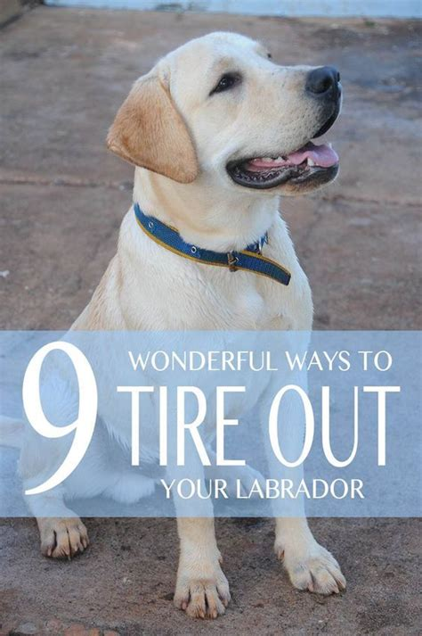 how to tire out a puppy 17 best ideas about tire out on