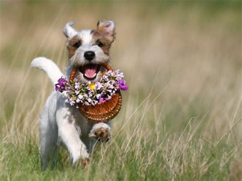 puppy with flowers with flowers flowers ideas for review