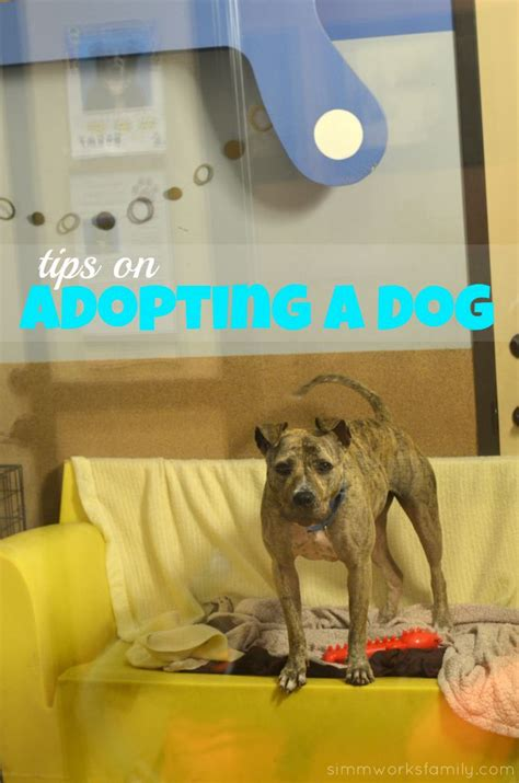 adopting a tips clear the shelters tips on adopting a