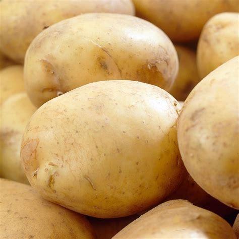 buy potato extra early salad scottish basic seed potato