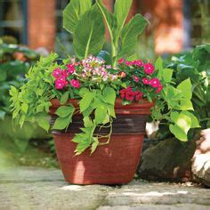 a colorful planter adds oomph to your outdoor space and