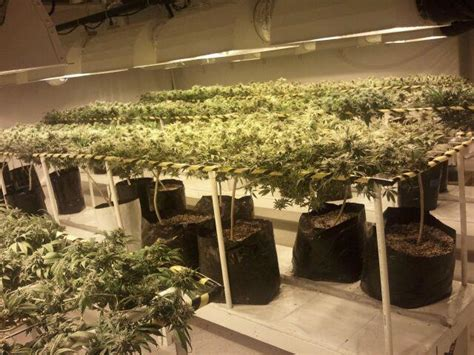 Grow Room by Grow Room Setup The Cannabis Grow Room Design