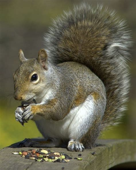 what to feed squirrels in backyard how to attract squirrels chipmunks and rabbits to your yard pet care corner