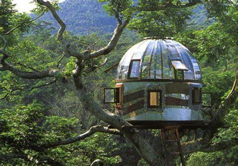 albero in casa rifugi per l estate le sugli alberi di pete nelson