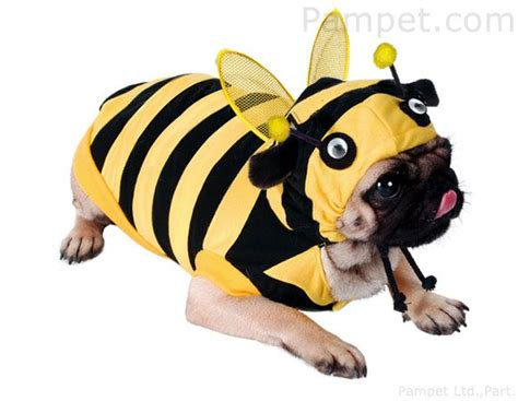 a bee puppies costume bumble bee