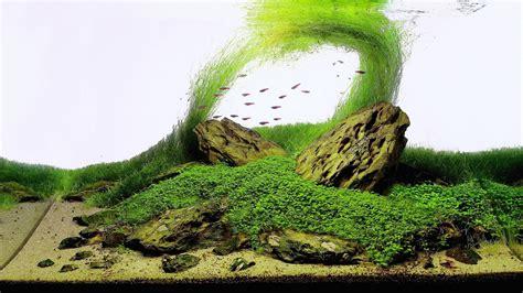 Cool Aquascapes La Importancia De Un Acuario Natural Taringa