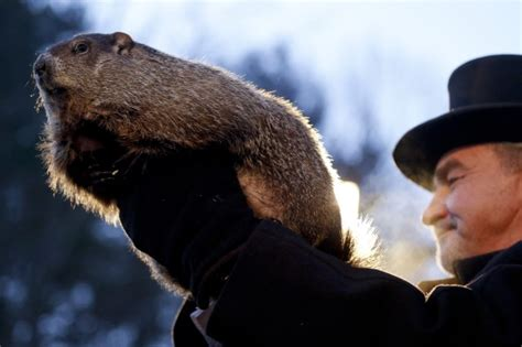united groundhog day meteorologists punxsutawney phil predict 6 more weeks of