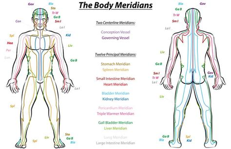 medicine meridians diagram science finally proves meridians exist