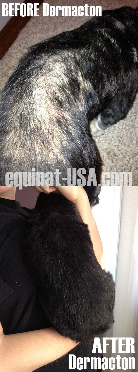 home remedys for dogs losing hair 125 best images about natural treatment canine dermatitis
