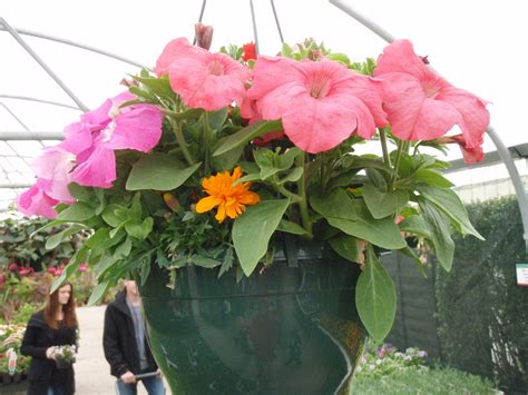 best plants best plants for hanging baskets ideas with images