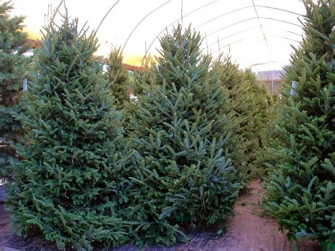 ergle christmas tree farm farm for sale dade city