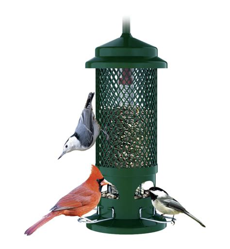 amazon com brome 1057 squirrel buster standard wild bird