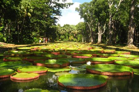 Mauritius Botanical Garden Plemousses Botanical Gardens