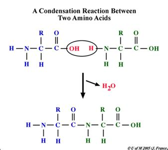 condensation or dehydration bioap ch 5 collaboration