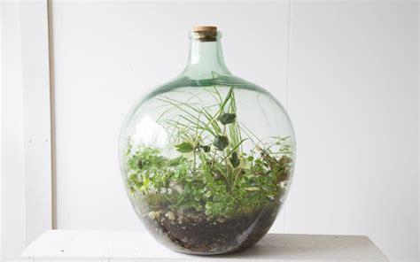 terrariums    whats   green fingered