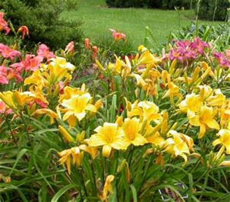 heather justesen it s time to consider summer blooming bulbs