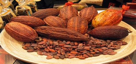 el cacao es declarado producto de bandera per 250