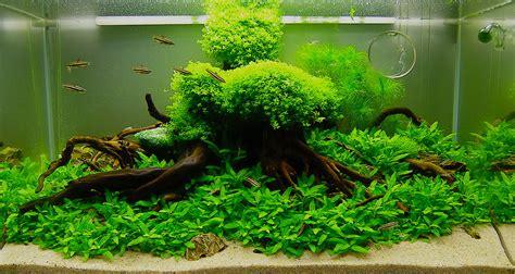 membuat hiasan aquascape apa aja yg perlu dipersiapkan untuk membuat aquascape