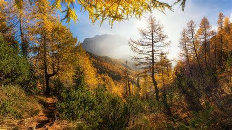wallpaper trees mountains sunshine autumn  uhd