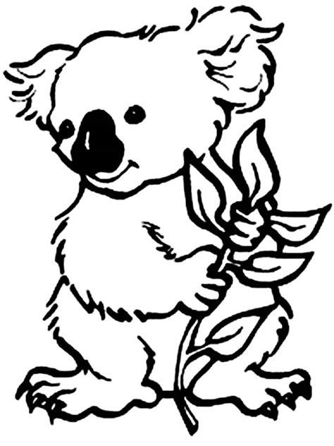koala coloring pages to print koala coloring pages clipart best