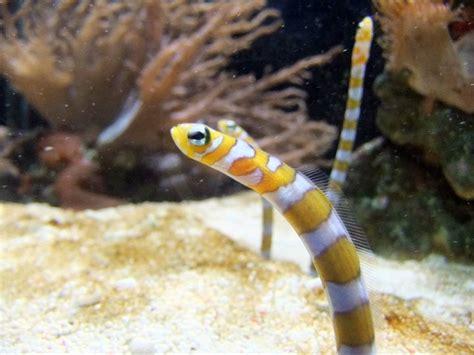 Garden Eels by Garden Eel Saltwater World