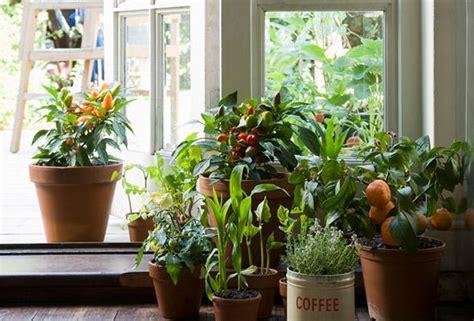 in door plant put in pot vide les plantes d int 233 rieur pourquoi en avoir et lesquelles