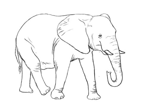 Drawing Elephant by Elephant Drawings Drawing Pics