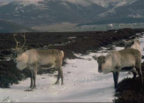 reindeer section section 9 ballindalloch to tomintoul speyside way