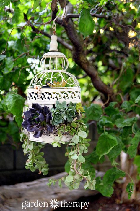 how to make a succulent planter how to make a birdcage succulent planter garden therapy