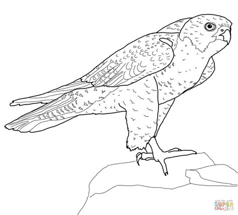 perched peregrine falcon coloring page free printable