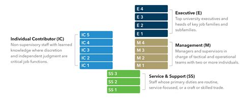 Mba Healthcare Management Career Path by Top On Career Ladder Description Best Image Voixmag