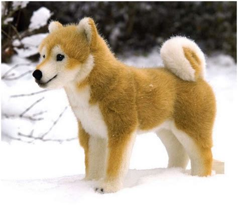 shiba inu puppies price shiba inu facts pictures puppies price temperament rescue animals adda