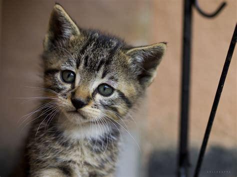 foto animali da cortile il gattino triste di calitri foto immagini animali